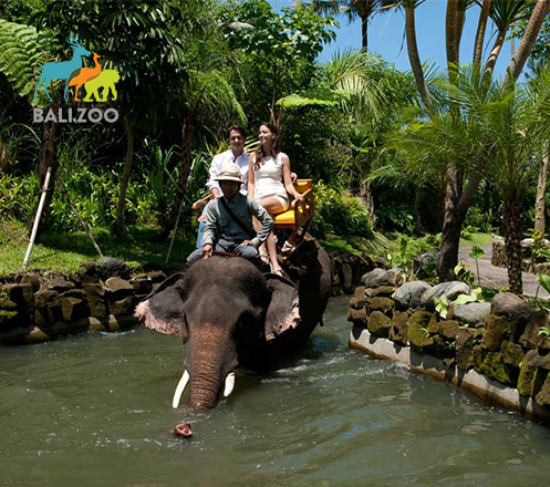 Zoo + Elephant Safari Expedition at Bali Zoo