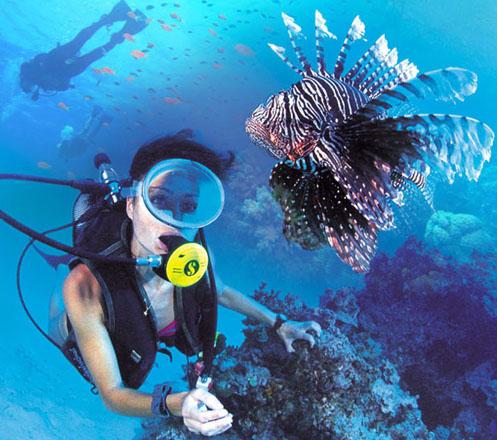 Diving Nusa Dua Bali
