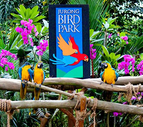 Jurong Bird Park Singapore + Tram