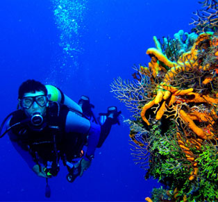 Scuba Diving at Tulamben...