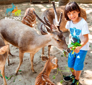 Admission for Bali Zoo...