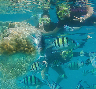 Open Trip Harapan Island...